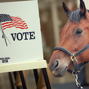 http://thedailyer.com/wp-content/uploads/2015/12/HorsesVotingRights-300x300.png